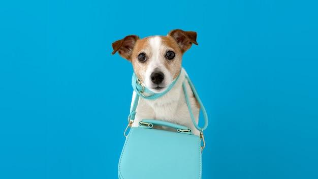 Cão bonito com bolsa feminina