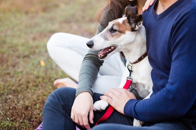 Cão bonito com casal no parque