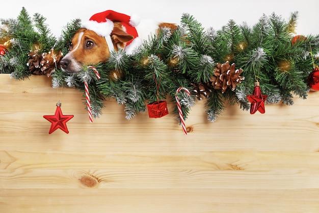 Cão bonito com chapéu de papai noel perto de galho de árvore de natal.