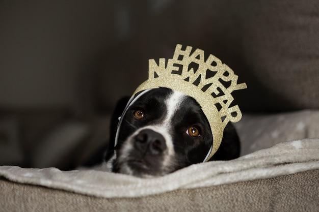 Cão bonito com coroa de feliz ano novo