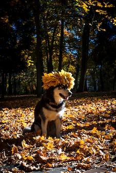 Cão bonito com folhas no outono park
