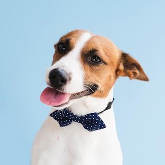 Cão bonito com língua de fora e arco
