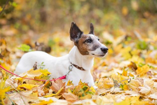 Cão bonito com trela deitado em forrest