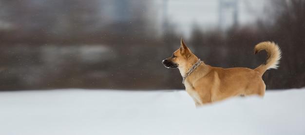 Cão bonito da raça misturada lá fora. vira-lata na neve