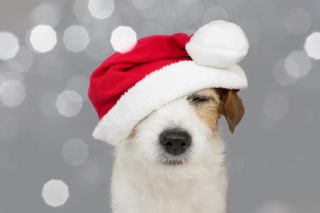 Cão bonito de russell do jaque que desgasta um chapéu vermelho do natal.