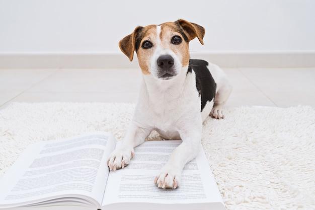 Cão bonito deitado com o livro aberto, olhando para a câmera