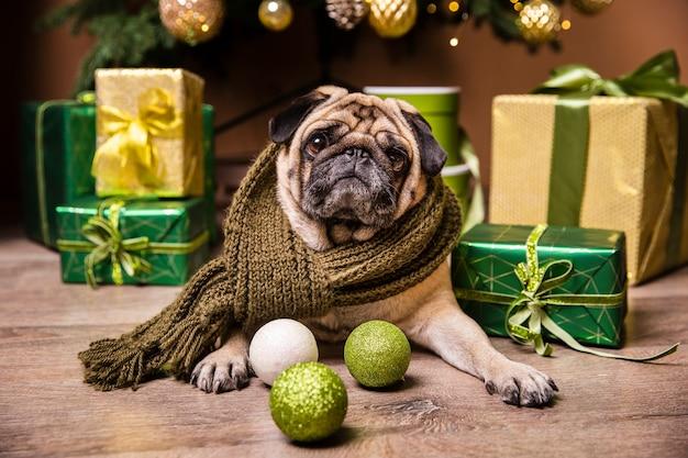 Cão bonito deitado na frente de presentes para o natal
