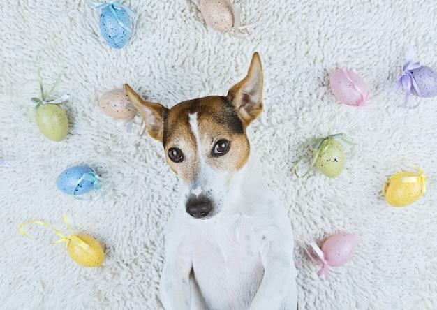 Cão bonito deitado no tapete branco com ovos de páscoa pintados