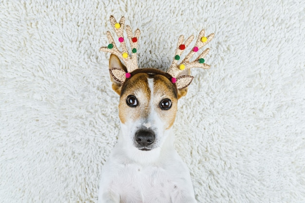 Cão bonito em chifres de veado de natal ouro