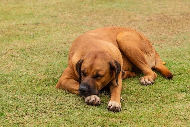 Cão bonito em uma postura diferente