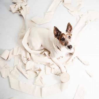 Cão bonito fazendo enorme bagunça com papel de enrolar