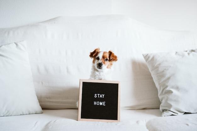 Cão bonito jack russell no sofá com placa de carta com mensagem de estadia em casa.