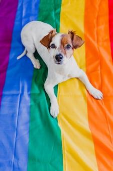Cão bonito jack russell sentado na bandeira do arco-íris lgbt no quarto. comemore o mês do orgulho e o conceito de paz mundial