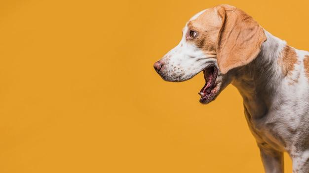 Cão bonito latindo com espaço de cópia