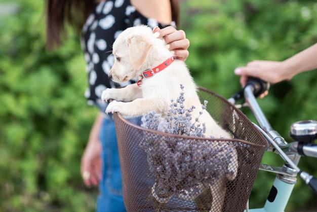 Cão bonito na cesta de bicicleta