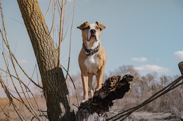 Cão bonito no campo, estando em uma árvore seca, tiro do herói. retrato de cão de raça misturada ao ar livre na primavera ensolarada ou dia de outono, cor editada de forma criativa