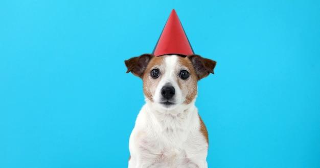 Cão bonito no chapéu de festa vermelho