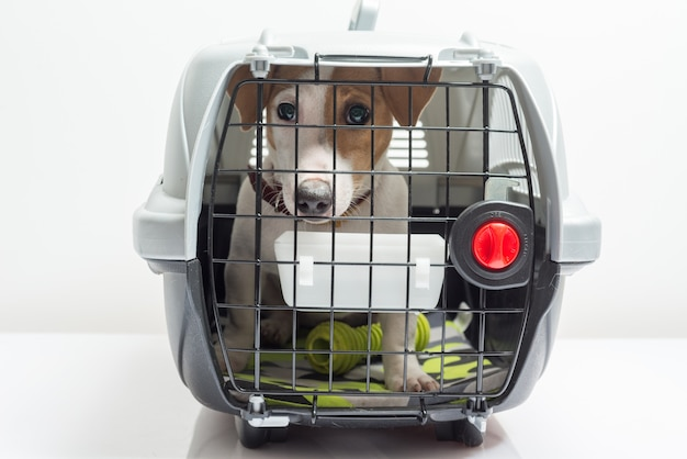 Cão bonito no transportador