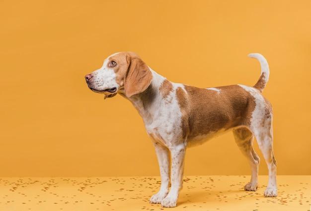Cão bonito querendo saber, olhando para longe