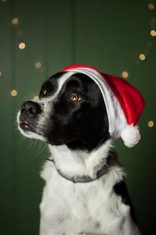 Cão bonito usando chapéu vermelho do papai noel dentro de casa