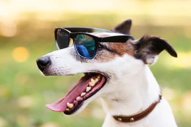Cão bonito usando óculos de sol