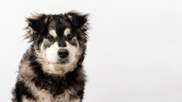 Cão bonito vista frontal com cópia-espaço