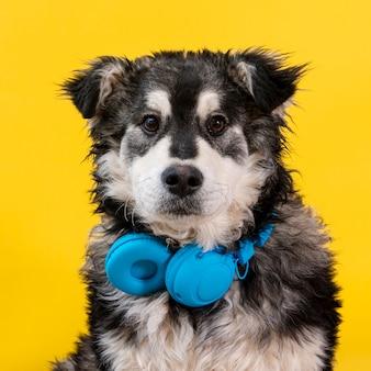 Cão bonito vista frontal com fones de ouvido
