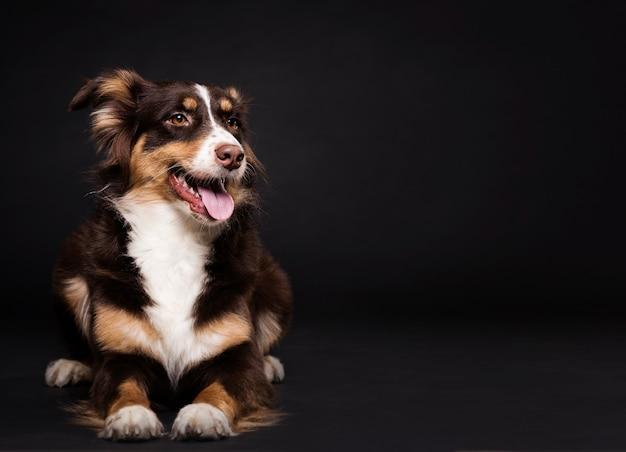 Cão bonito vista frontal