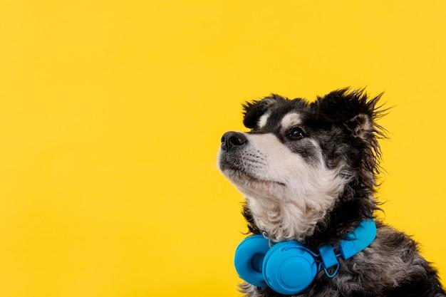 Cão bonito vista lateral com fone de ouvido