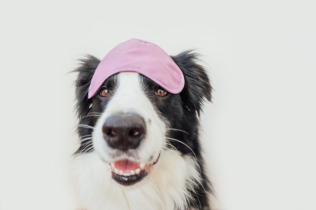 Cão border collie com máscara de dormir isolada no fundo branco