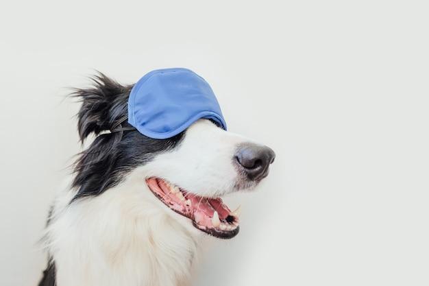 Cão border collie com máscara para dormir