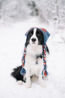 Cão border collie preto e branco na floresta de neve