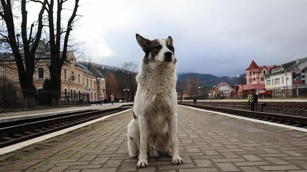 Cão branco com manchas pretas. cachorro brincalhão e faminto em uma estação de trem suburbana entre os trilhos da ferrovia e um parapeito da estação, um cachorro de rua segue o trem.
