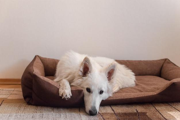 Cão branco deitado na cama do cão