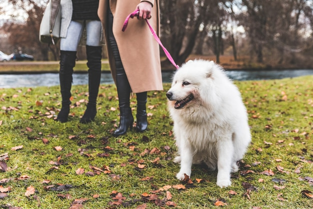 Cão branco na coleira no parque com duas mulheres