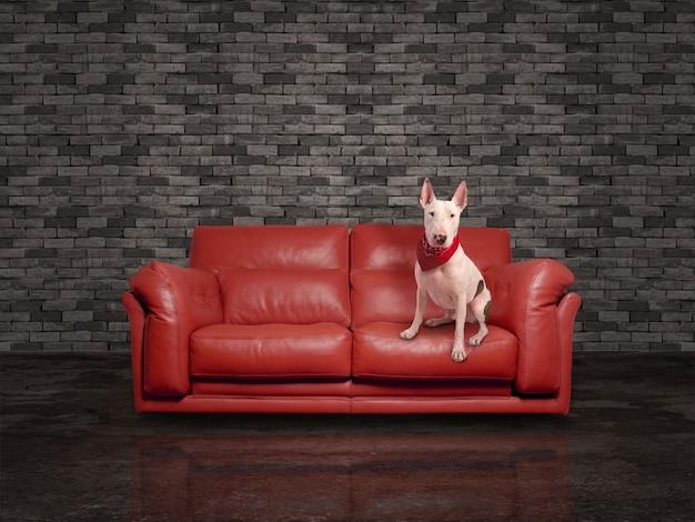 Cão branco sobre o sofá de couro vermelho