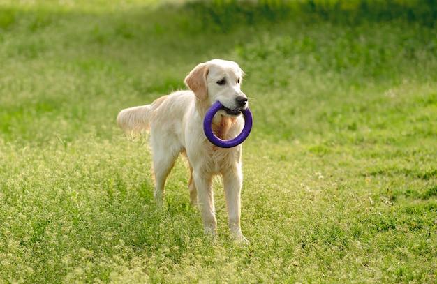 Cão brincalhão andando no campo de florescência