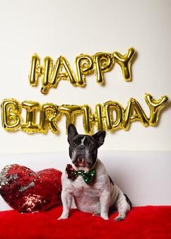 Cão buldogue francês com gravata-borboleta colorida comemorando aniversário