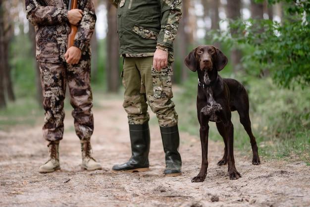 Cão caça ponteiro alerta com caçadores na floresta.