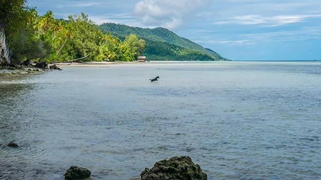 Cão caçando na água durante a maré baixa na ilha de kri, raja ampat, indonésia, papua ocidental