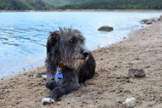 Cão calmo relaxed que encontra-se no assoalho no verão. fundo do lago natural