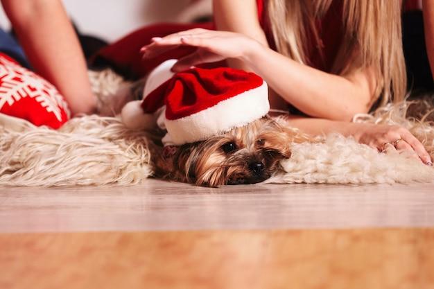Cão cão-yorkie de natal vestindo santa
