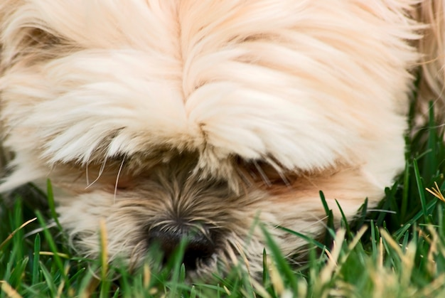 Cão, close-up