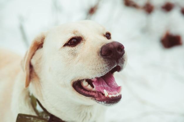 Cão com a boca aberta