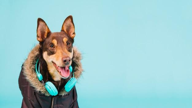 Cão com fones de ouvido