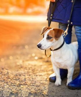 Cão com seu dono andar ao ar livre.