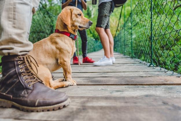 Cão com seus donos, sentado na ponte pênsil de madeira