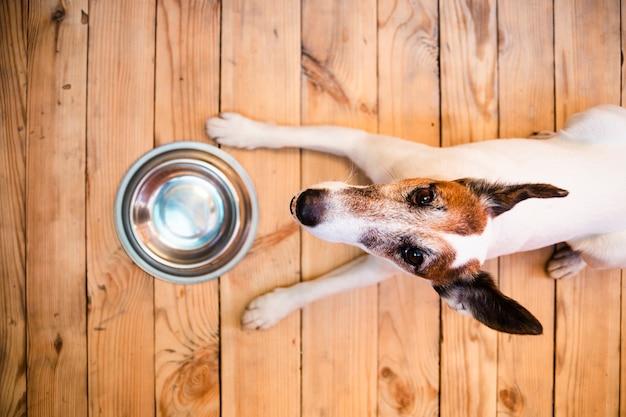 Cão com tigela de comida vazia