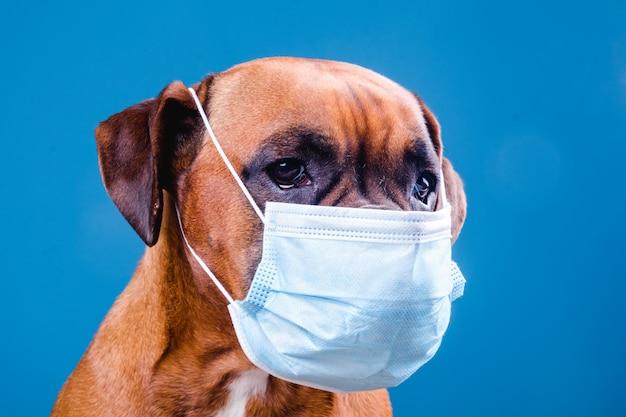 Cão com uma máscara facial