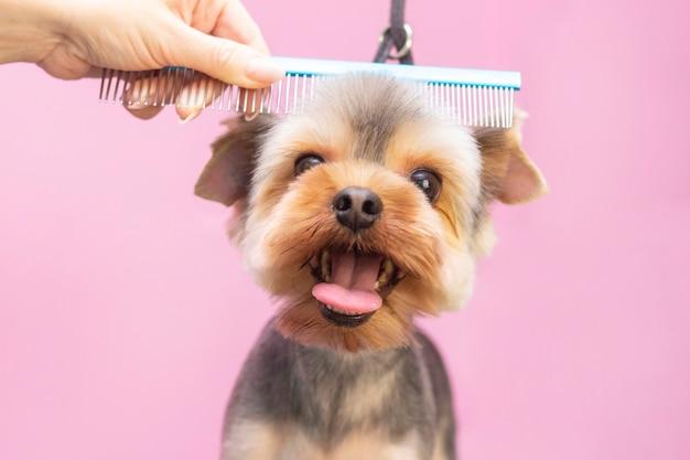 Cão corta cabelo no pet spa grooming salon.